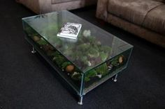 1000 images about terrarium on pinterest vivarium coffee tables and reptile cage. Black Bedroom Furniture Sets. Home Design Ideas