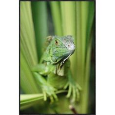 "East Urban Home 'Green Iguana Portrait' Framed Photographic Print on Canvas Size: 36"" H x 24"" W x 1.5"" D"