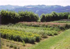 Più di 450 le specie di piante officinali e aromatiche presenti al Giardino