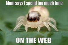 Mom says I spend too much time on the web, hahaha