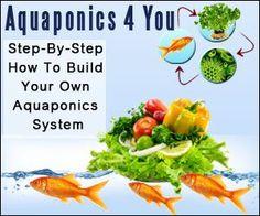 Scenarios+–+Aquaponics+4+You+&+Systems+Review+By+John+Fay+–+Amazing+Secret