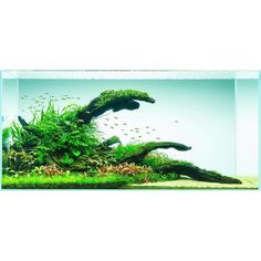 #water #wabikusa #watertank #waterplants #tropica #twinstar #takashiamano #iwagumi #instafish #instaperfect #picoftheday #plantedtank #plantedinstyle #ada #amano #aquasky #aquarium #aquascape #aquascaping #aquascapeaquarium #aquadesignamano #scape #dream #doaqua #daytime #gogreen #hardscape #beautiful #natureaquarium by chaq.wa