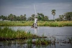 Spend time being poled through the waterways of the Okavango in a mekoro.