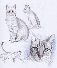 Cat Drawing,