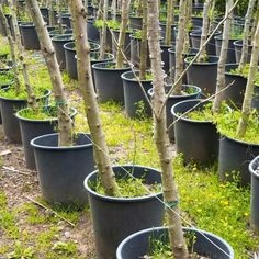Growing fruit trees in buckets or a similar container is an excellent way to cultivate your own fruit, even in small spaces. garden vegetable videos 12 Fruit Trees You Can Grow In Buckets Growing Fruit Trees, Small Garden, Container Gardening Vegetables, Plants, Fruit Garden, Vegetable Garden Design, Potted Trees, Container Gardening, Growing Tree