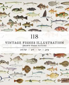 Download free royalty-free images of vintage fishes at rawpixel.com