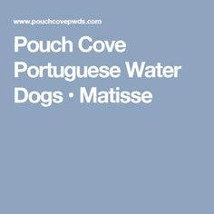 Pouch Cove Portuguese Water Dogs • Matisse