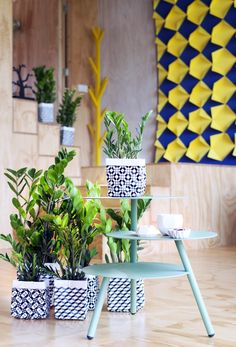 healthy living tips wellness programs for women Calathea Lancifolia, Modern Floor Plans, Decoration Plante, Have A Lovely Weekend, Rustic Coffee Tables, Bath And Beyond Coupon, Farmhouse Chic, Balcony Garden, Succulent Plants