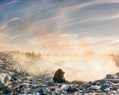Un orso in pessime condizioni, seduto mentre rovista tra i rifiuti in fiamme di una discarica a cielo aperto alla ricerca di cibo. Lo scatto realizzato da Troy
