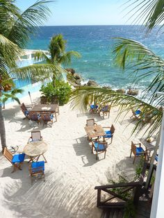 Oceanview and dining with your feet in the sand under the palmtrees - Scuba Lodge Restaurant - Willemstad, Curaçao
