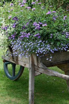 Gardeny Whimsy- gorgeous old wheelbarrow potted with pretty blue  purple flowers.  Now to find an wooden wheelbarrow!