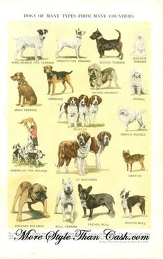 essay on pet dog pdf