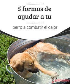 5 formas de ayudar a tu perro a combatir el calor ¿Sabes como ayudar a tu perro a combatir el calor? Encuentra en este artículo algunos consejos para prevenir el golpe de calor en tu mascota.