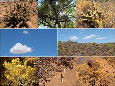 Into the real wild : Tankwa Karoo - One Footprint On The World Parc National, National Parks, Footprint, South Africa, World, Travel, Pathways, The World, Trips