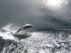 Beautiful dolphin picture