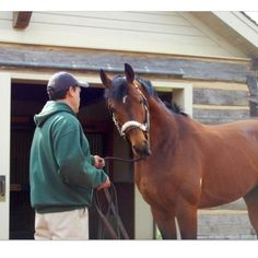Big Brown- Winner of 2008 Derby and Preakness This horse is handsome as actual hell All The Pretty Horses, Beautiful Horses, Derby Winners, Sport Of Kings, Big Brown, Thoroughbred Horse, Happy Pictures, Black Horses, Racehorse