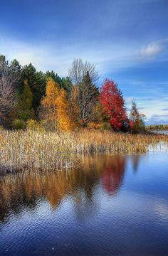 ✯ Wetlands