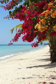 Bougainvillea on the Beach / Mauritius The Beach, Ocean Beach, Paradis Tropical, Tropical Paradise, Mauritius, Belle Photo, Beautiful Beaches, Beautiful World, Beautiful Pictures