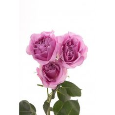 Lavender Spray Roses - Blue Moon; love the spray roses - teensy - do they come in a deeper purple?