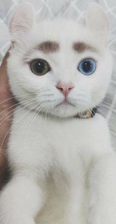 Cute Kitten Names That Start With S except Cute Kittens For Sale In India during Cute Cats Kneading Gif until Pictures Of Cute Cats And Kittens Hd along with Cute Kitten Meowing Gif Cute Funny Animals, Cute Baby Animals, Funny Cats, Animals Dog, I Love Cats, Crazy Cats, Cool Cats, Cute Kittens, Pretty Cats