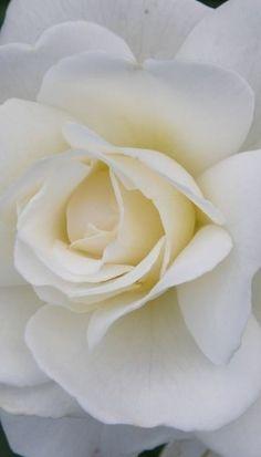 White Rose. Sphere Impression. Art2Arrange Weddingplanner.  #weddingplanner #art2arrange #glamourwedding  www.art2arrange.nl