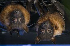 Bat Cam - Live Streaming Web Cam - Woodland Park Zoo Seattle WA