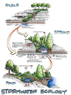 Stormwater Ecology