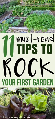 Are you a vegetable gardening beginner? Read these tips from a pro that will help you plant your best backyard garden ever!