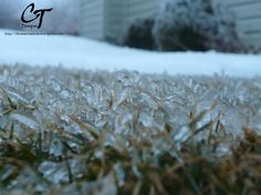 Blades of Grass Encased in Ice