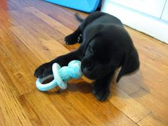 One Little Word She Knew: Kong Puppy Toy Review
