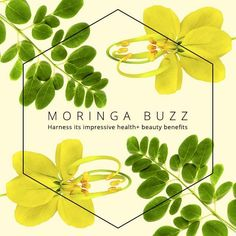 Enhance Your Beauty Inside and Out With Moringa (Our New Obsession)