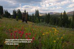 Peaceful mountain wildflower scene, Shrine Pass Colorado