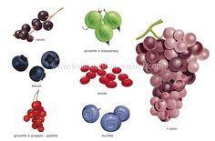 Baies: Petits fruits charnus qui contiennent une ou plusieurs graines généralement comestibles. Lorsqu'ils sont groupés en grappe, chaque fruit est appelé « grain ».