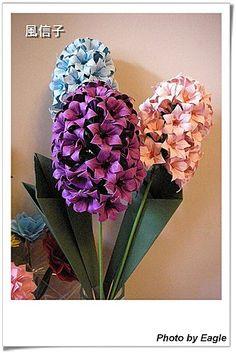 風信子 花萼、梗子、葉子組合 與 葉子圖解 Hyacinth calyx 、 stem 、 leaf and Leaf Diagrams