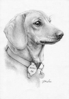 Dog Pencil Drawing, Cool Pencil Drawings, Pencil Portrait Drawing, Cute Drawings, Realistic Animal Drawings, Dog Artist, Dachshund Art, Pet Portraits, Dog Breeds