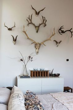 One of the cooler ways to use animal heads....