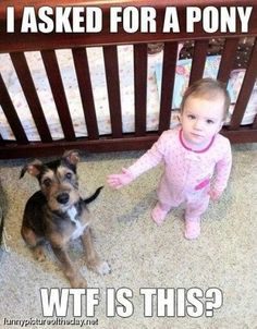 The 32 Funniest Baby Memes All in One Place - Funny Baby - As the commercial says: apparently riding the dog like a pony is frowned upon in this establishment! Hahaha The post The 32 Funniest Baby Memes All in One Place appeared first on Gag Dad. Funny Shit, Funny Baby Memes, Funny Babies, Haha Funny, Funny Cute, Baby Humor, Funny Stuff, Kid Memes, Super Funny