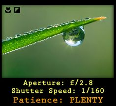 Macro Photography Tips Some, much-needed macro photography tips given here will help you take pictures just like a seasoned professional.
