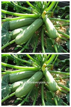Vegetables Photography, Vegetable Garden, Healthy Lifestyle, Healthy Eating, Soda, Home And Garden, Healthy Recipes, Outdoor, Garden