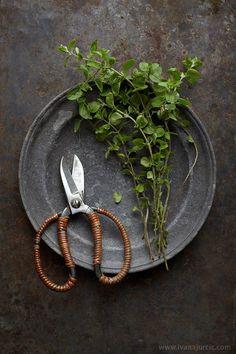 Fresh Oregano by lilit - Ivana Jurcic (fresh herbs photography) Vegetables Photography, Food Photography Styling, Food Styling, Photo Food, Spices And Herbs, Fresh Herbs, Aromatic Herbs, Kraut, Raw Food Recipes