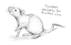 How to draw a rat step 4