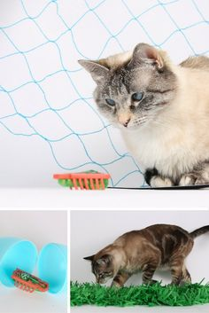 The HEXBUG is a robotic bug toy that cats like. How can you use a HEXBUG to play with your cat? We have some ideas, tips and tricks for interactive cat toy play