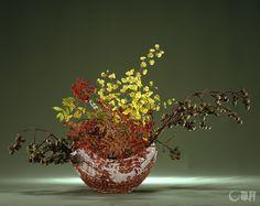紅葉する素材の本当の美しさは、いけた瞬間にしか味わうことのできないものです。その刹那とオンシジウムのみずみずしさとの差異で、時の移り変わりを感じながらいけました。花材:桐、ななかまど、オンシジウム 花器:陶器花器 The true beauty of copper red leaves of autumn can only be appreciated on completion of arranging them. The contrast between momentary life and the lasting freshness of dancinglady orchid makes us more aware of time passing. Material:Princess tree, Sorbus commixta, Dancinglady orchid Container:Ceramic vase  #ikebana #sogetsu