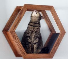 Super unique PolyKitty Polygon Cat Shelf Made by hand with Red Oak We use 2 coats of American Chestnut stain Finish and two coats of polyurethane High Gloss. The 6 sides are attached together with glue and wood bisques so there are no screws or nails. Dark gray felt attached pads where kitty lays and plays. Secures to wall easily with 6 inch 50 pound Cleat hangers. 24 Inches Wide 21 Inches Tall 9 Inches Deep  Free Shipping To the continental US  If you would like me to ship to Alaska/Haw...