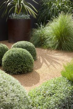Reith Muller 007 If you want to remodel, renovate and. Informations About Reith Muller 007 Australian Garden Design, Australian Native Garden, Modern Garden Design, Contemporary Garden, Landscape Design, Dry Garden, Gravel Garden, Winter Garden, Gravel Path