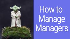 How to lead senior project managers