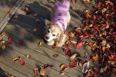 코콜라 CoCCoLa : 날씨가 대박이었어~  트렌치 코트 핑크