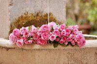 Pinkfarbene Rosen liegen in Steinbrunnen im Garten