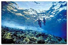 Maui hawaii snorkeling-one of my favorite memories of Hawaii. Kapalua Bay :)