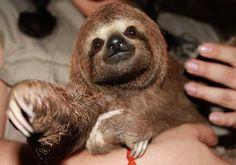 Mr. Sloth!